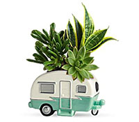 Cool Camper and Succulents